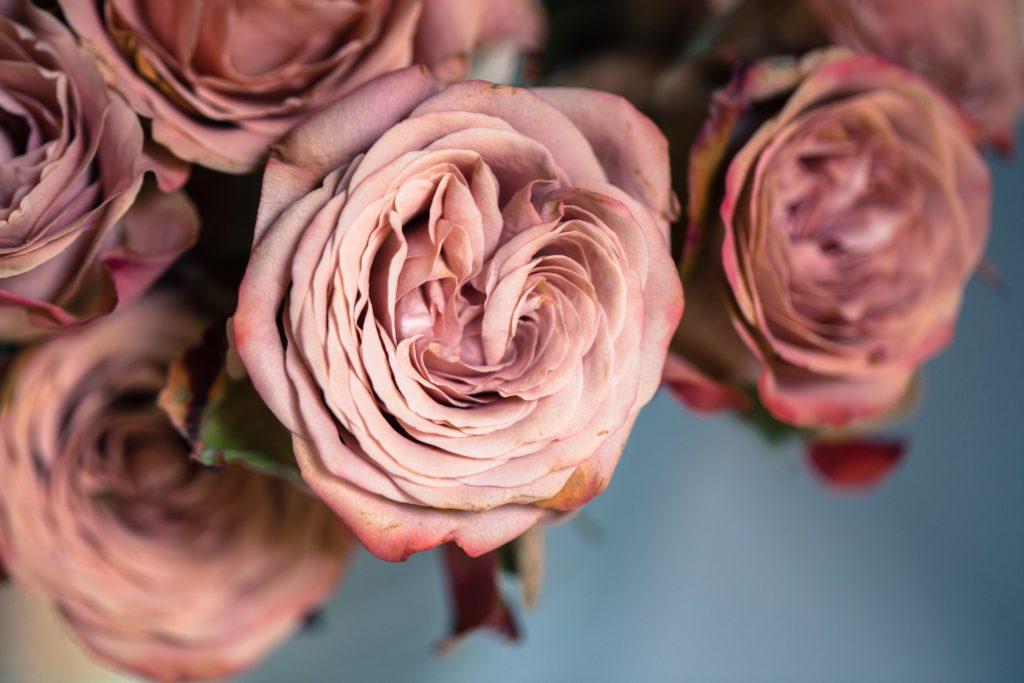 dusty-rose_4460x4460